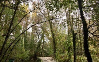 15.10.2019 – Camino Portugués 6. Tag