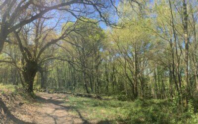 04.05.2018 – Camino Primitivo 8. Tag